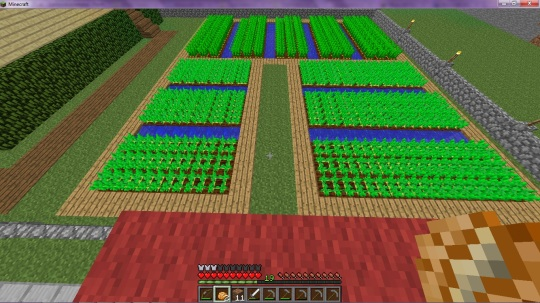Fazenda cenoura e batata