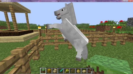 Domando Cavalos